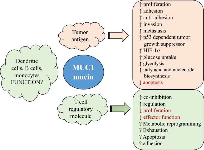 New therapeutic targets for cancer: the interplay between
