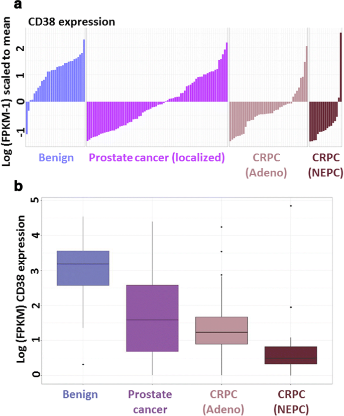 CD38 is methylated in prostate cancer and regulates extracellular
