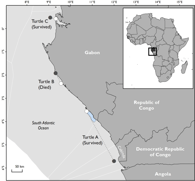 Sea turtles and survivability in demersal trawl fisheries
