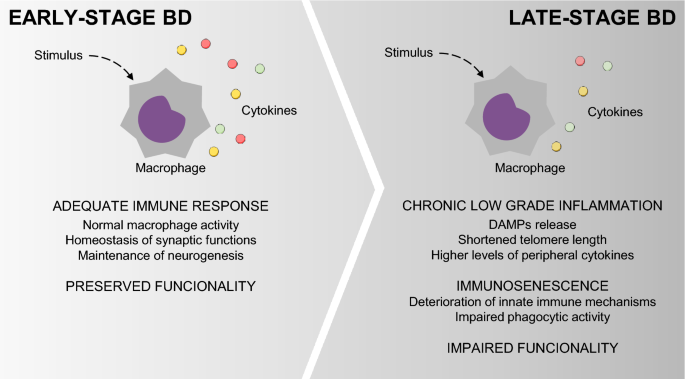 Attenuated inflammatory response of monocyte-derived