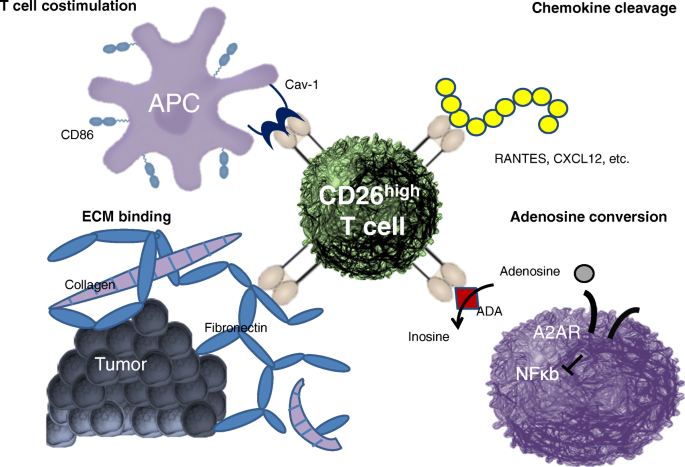 Perspectives in immunotherapy: meeting report from the