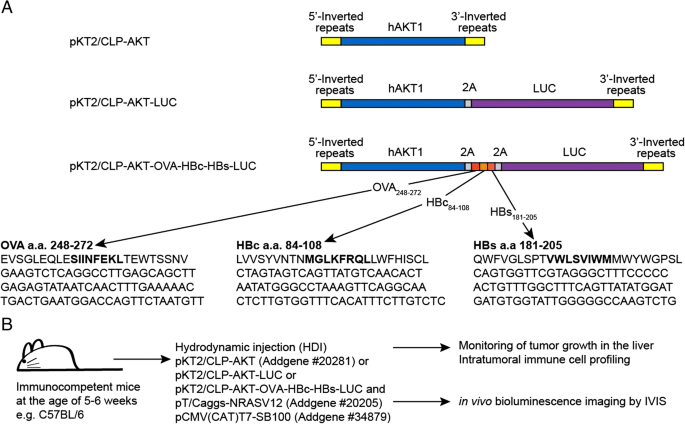A novel spontaneous hepatocellular carcinoma mouse model for