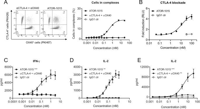 The CTLA-4 x OX40 bispecific antibody ATOR-1015 induces anti