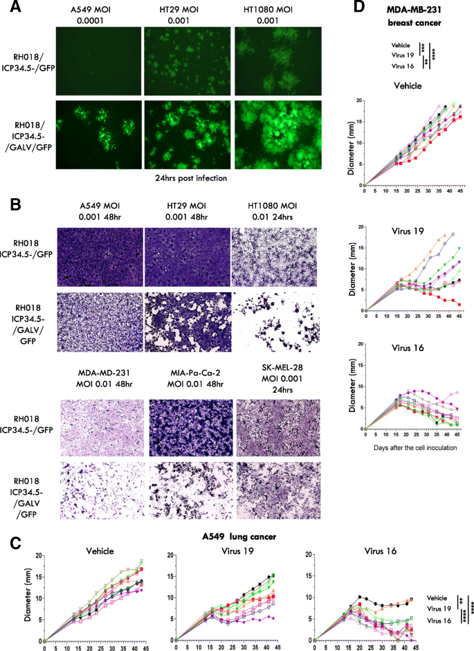 Development of a new fusion-enhanced oncolytic immunotherapy