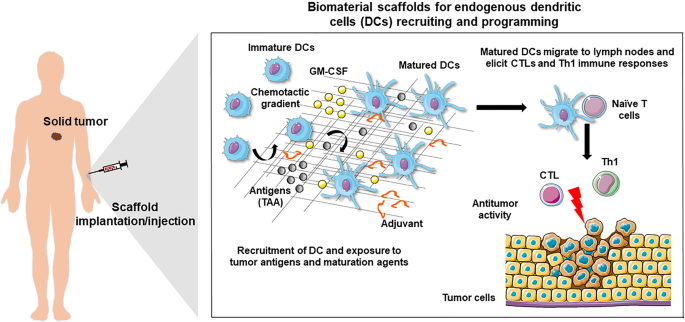 Biomaterial-based platforms for in situ dendritic cell