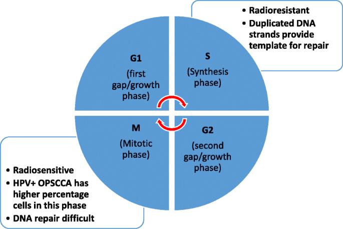 The molecular mechanisms of increased radiosensitivity of HPV
