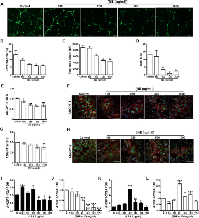 Neutrophil elastase inhibition effectively rescued angiopoietin-1