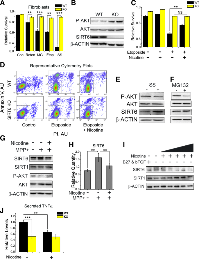 Nicotine promotes neuron survival and partially protects from