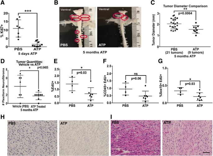 Tonic ATP-mediated growth suppression in peripheral nerve