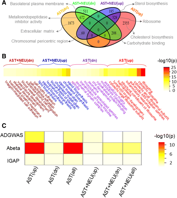 GJA1 (connexin43) is a key regulator of Alzheimer's disease