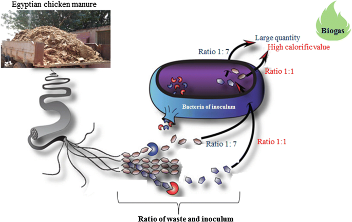 Effect of increasing inoculum ratio on energy recovery from