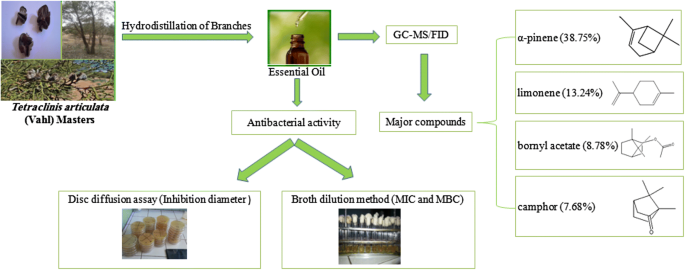 Chemical composition and antibacterial activity of essential