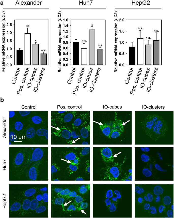 Progressive Lysosomal Membrane Permeabilization Induced By Iron Oxide  Nanoparticles Drives Hepatic Cell Autophagy And Apoptosis | Nano Convergence  | Full Text