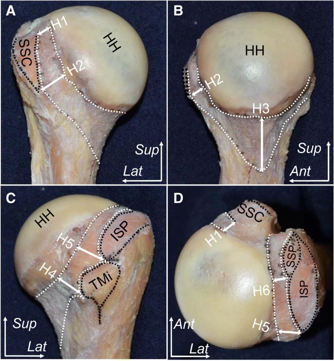 cremă pentru articulații la genunchi