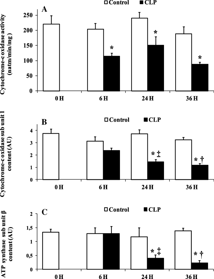Time course of liver mitochondrial function and intrinsic changes in