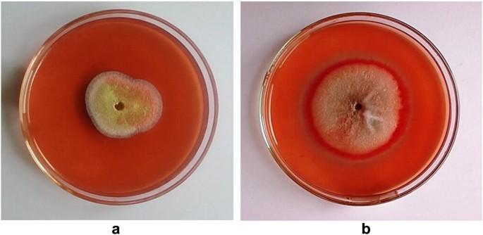Characterization of thermophilic fungi producing