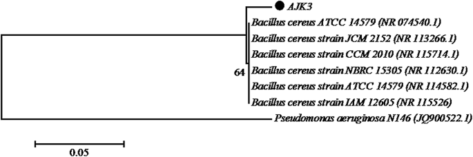 Bacillus cereus , selenite-reducing bacterium from