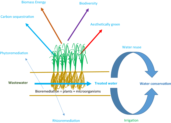 Bioremediation of brewery wastewater using hydroponics planted with
