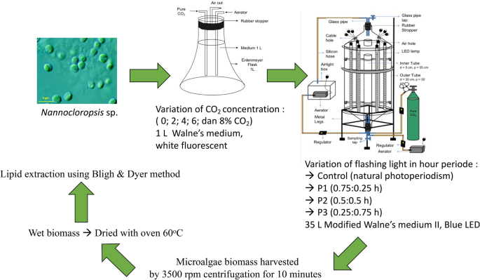 Enhanced Biomass Productivity Of Microalgae Nannochloropsis Sp In An Airlift Photobioreactor Using Low Frequency Flashing Light With Blue Led Springerlink