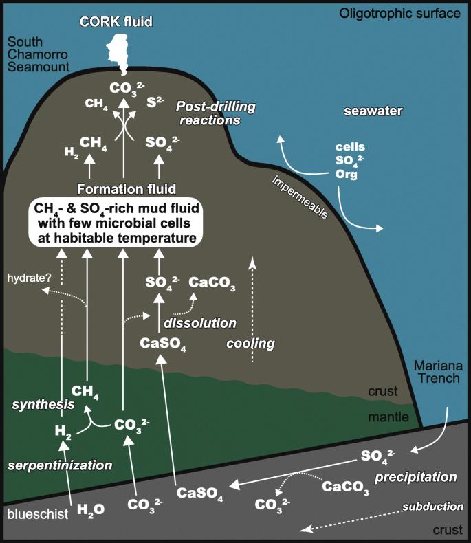 Cool, alkaline serpentinite formation fluid regime with