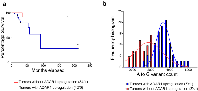 ADAR1-mediated RNA-editing of 3′UTRs in breast cancer | Biological