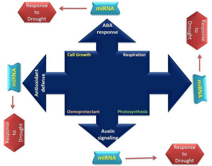Coping with drought: stress and adaptive mechanisms, and
