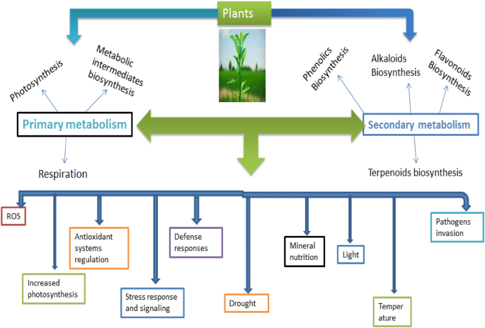 Stress and defense responses in plant secondary metabolites