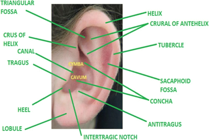 A Study Of Morphological Variations Of The Human Ear For Its Applications In Personal Identification Springerlink