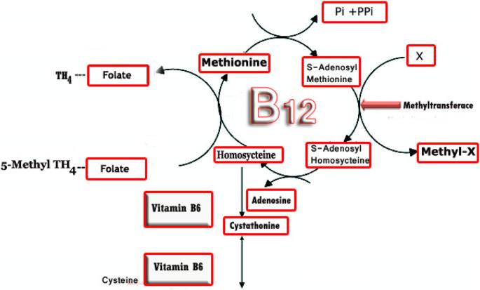 anemie b12 cim 10)