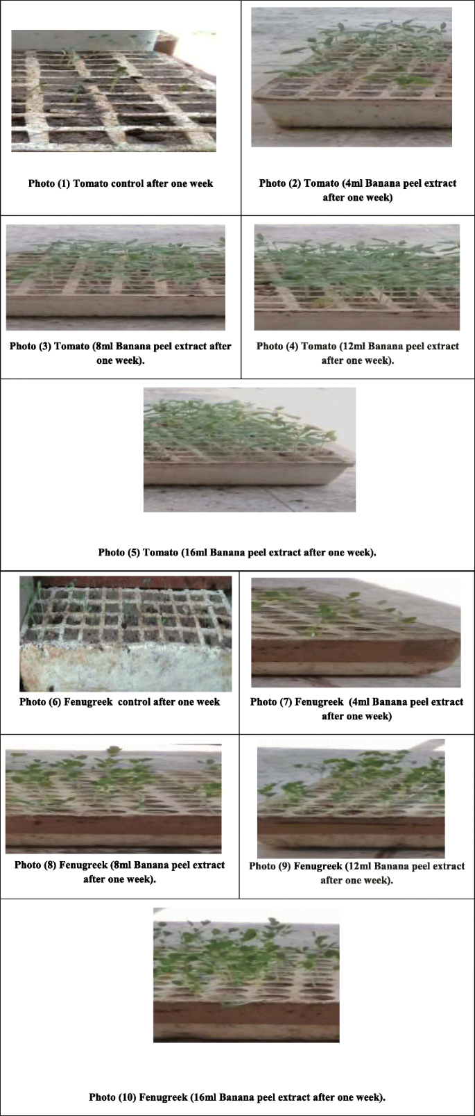 Preparation of nano-fertilizer blend from banana peels