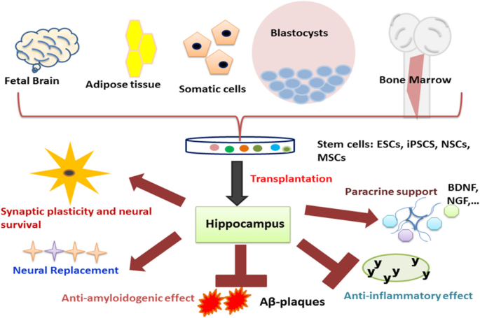 Stem cells as a promising therapeutic approach for
