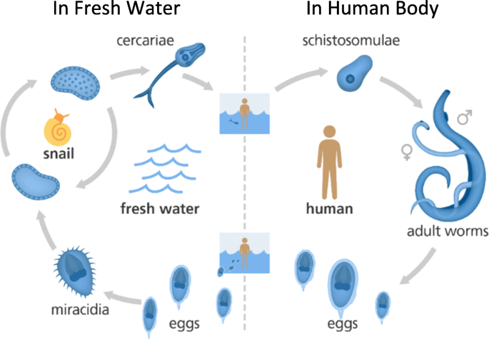papilloma virus vaccino bambini viermi cilindrici