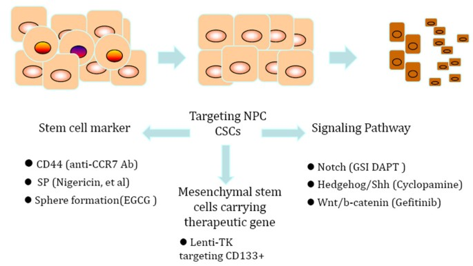 Cancer stem-like cell: a novel target for nasopharyngeal
