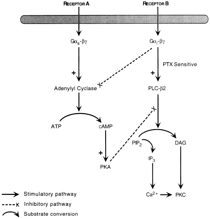 Regulation of Uterine Smooth Muscle Function during
