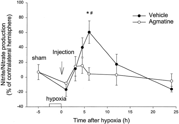 Agmatine Suppresses Nitric Oxide Production and Attenuates Hypoxic
