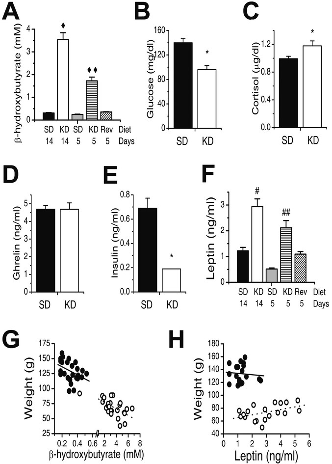 Leptin Contributes to Slower Weight Gain in Juvenile Rodents on a