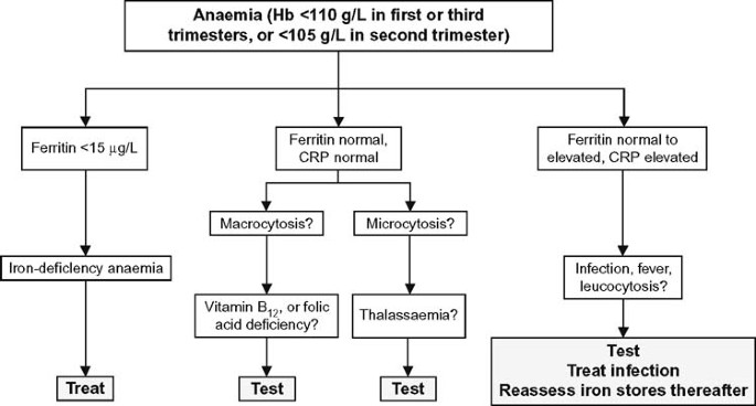 Assessment and Differential Diagnosis of Iron-Deficiency Anaemia during  Pregnancy | SpringerLink