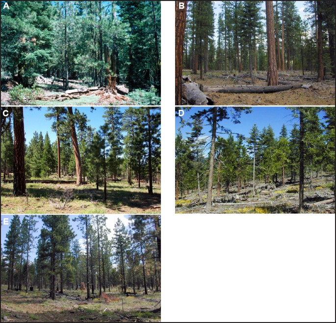 Effects of Creating Two Forest Structures and Using Prescribed ...