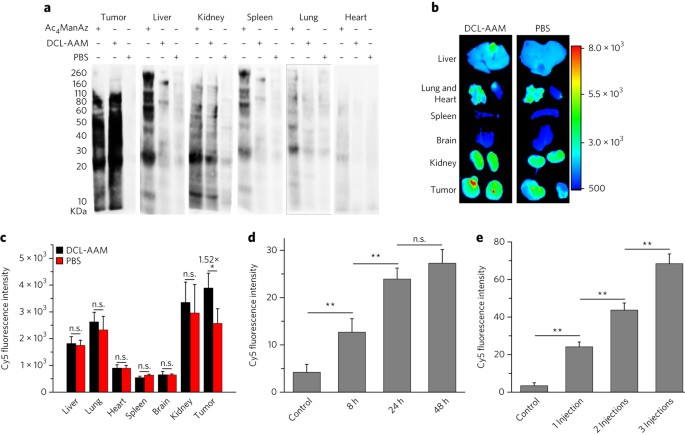 Selective in vivo metabolic cell-labeling-mediated cancer