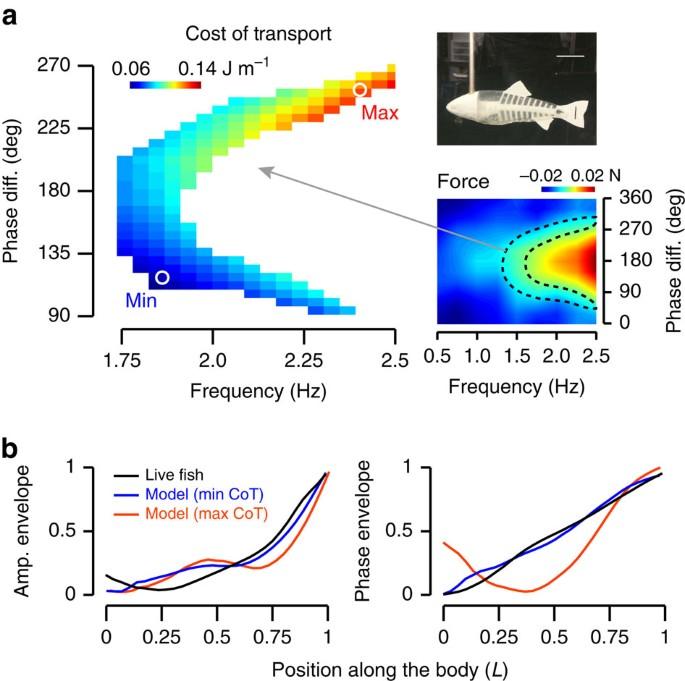 Fish Optimize Sensing And Respiration During Undulatory