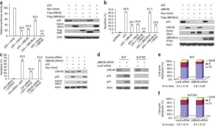 Correction: O-GlcNAcylation promotes colorectal cancer