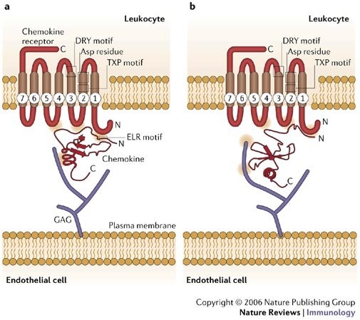 Tuning Inflammation And Immunity By Chemokine
