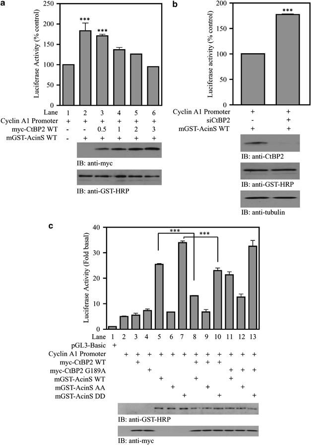 Gambogic acid inhibits proliferation and induces apoptosis