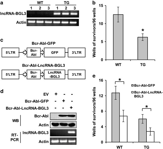 A long noncoding RNA critically regulates Bcr-Abl-mediated