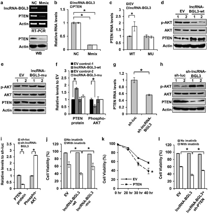 (PDF) A long noncoding RNA critically regulates Bcr-Abl