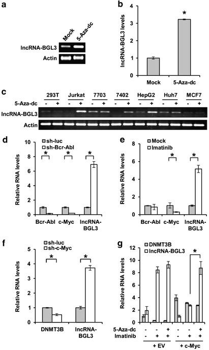 As2O3-induced apoptosis on cells expressing leukemia