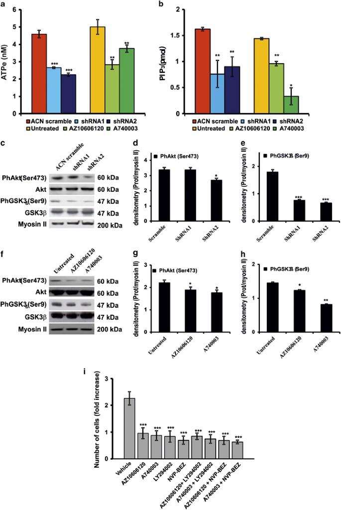 The P2X7 receptor is a key modulator of the PI3K/GSK3β