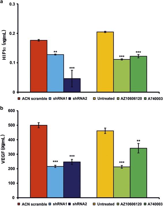 The P2X7 receptor is a key modulator of aerobic glycolysis
