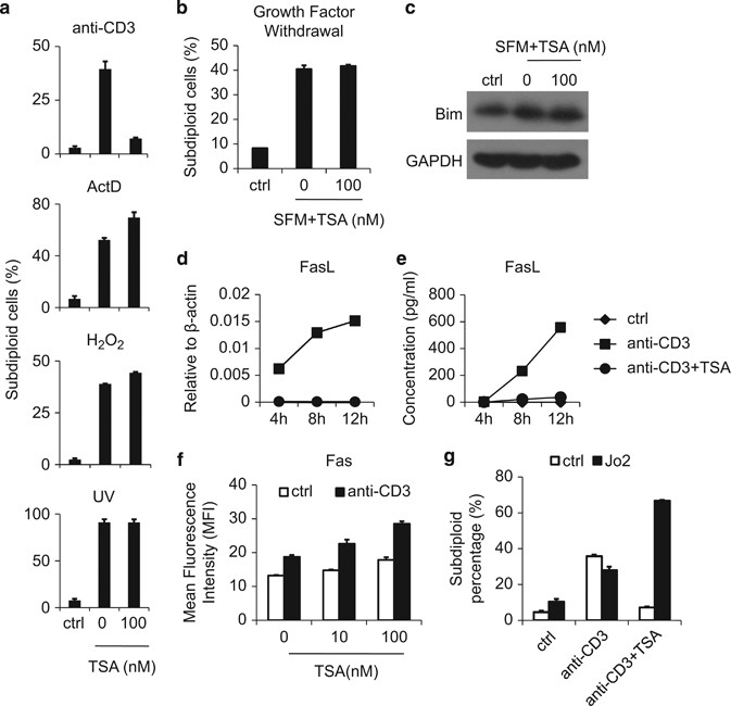 Effect of ␤ Pix depletion by siRNA expression on growth