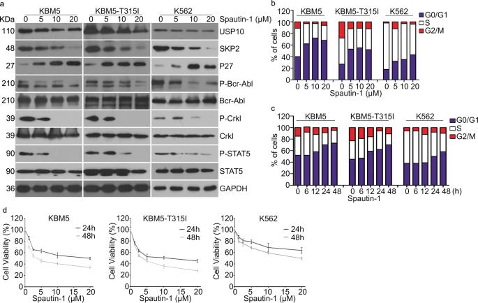 USP10 modulates the SKP2/Bcr-Abl axis via stabilizing SKP2